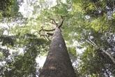 La foresterie communautaire, un outil efficace contre la pauvreté