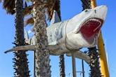 Le requin des Dents de la merprêt à terroriser les visiteurs du futur musée des Oscars