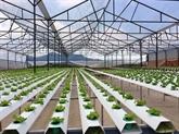 Vinh Phuc promeut l'agriculture high-tech