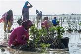 La BM octroie 400 millions d'USD à l'Indonésie pour restaurer des mangroves