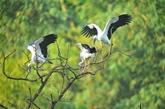 Symposium sur la protection de la faune et de la flore sauvages
