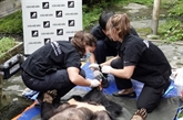 Deux ours noirs d'Asie captifs rejoignent leur nouvelle demeure