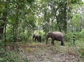 La protection de la faune de l'ASEAN au menu des experts