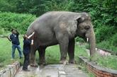 Cher accueille au Cambodge l'éléphant maltraité du Pakistan