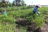 Le développement de l'agriculture et de la ruralité en plein contexte de COVID-19