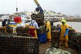 Brexit : les négociations avancent mais bloquent toujours sur la pêche