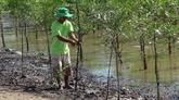 Des ménages de Trà Vinh plantent des forêts pour prévenir l'érosion côtière