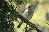 L'observation des oiseaux à Central Park, rare loisir en temps de COVID