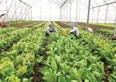Hanoï s'oriente vers une économie fermière durable