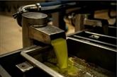 Dans le Péloponnèse, la récolte des olives souffre du coronavirus