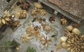 Chez les tresseurs de nasses de Thu Sy