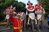 Des éléphants en père Noël distribuent des masques dans une école