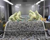 Poursuite de la croissance des exportations des crevettes sur de nombreux marchés