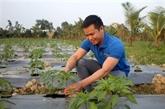 À Thanh Hoa, un jeune paysan réussit la culture de piment pour l'exportation
