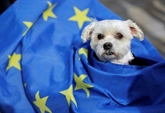 Brexit : pour les animaux britanniques, un mal de chien à voyager en Europe