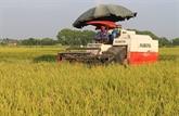 Hanoï développe la variété de riz de marque Japonica aux normes VietGAP