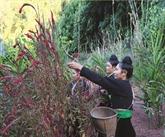 À la découverte du Têt des fleurs de l'ethnie Công