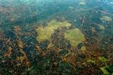 La forêt amazonienne a perdu la surface de l'Espagne en 18 ans