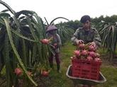 Difficultés pour les exportations de certains produits agricoles