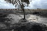 La pluie devrait mettre un terme à la crise des feux de forêts