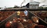 L'Indonésie exporte plus de 36 millions de tonnes d'huile de palme en 2019