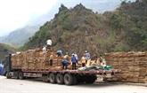Premiers lots d'exportation autorisés à la porte frontalière de Thanh Thuy