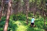 Quang Tri : Gestion durable des forêts en réponse au changement climatique
