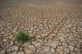 La Thaïlande renforce les aides aux agriculteurs touchés par la sécheresse