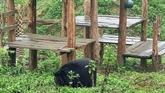 Ninh Binh : un refuge d'ours attrayant pour les touristes étrangers