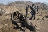Le nombre de rhinocéros braconnés en baisse en 2019