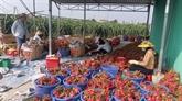Coronavirus: quel impact sur la croissance du Vietnam ?