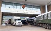 Nouveau coronavirus : protection des Vietnamiens en Chine