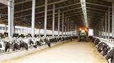 Le groupe vietnamien TH achète trois fermes d'élevage de bétail en Australie