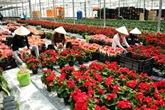 Les exportations de fleurs de Dà Lat en forte croissance