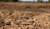 La sécheresse frappe la production agricole au Cambodge
