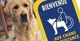 Une campagne pour plus de chiens d'aide à la personne