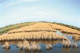 Le FVC accorde 30 millions d'USD pour renforcer la résilience climatique