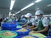 Le COVID-19 plombe les exportations vietnamiennes de noix de cajou