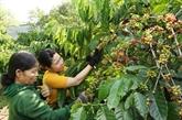 Nestlé Vietnam présente au monde le café vietnamien de première qualité