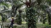 La Malaisie et l'Inde vont travailler à l'amélioration de leurs relations