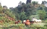 À Tùn Trên, un remède de cheval contre la pauvreté