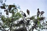 Bac Liêu parmi les dix réserves ornithologiques les plus célèbres au monde