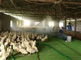 Thanh Hoa déclare la fin de la grippe aviaire A/H5N6