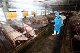 Dông Nai annonce la fin de la peste porcine africaine