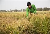 Les réserves alimentaires vietnamiennes sont suffisantes pour les situations d'urgence