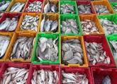 Binh Dinh et Ninh Thuân semploient à lutter contre la pêche INN