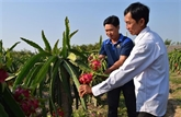 Les États-Unis, marché potentiel pour les fruits vietnamiens