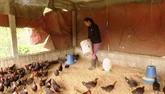 Renforcement de la prévention et de la lutte contre l'épidémie de grippe aviaire
