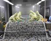 Belles perspectives pour les exportations de crevettes aux États-Unis