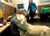 Ukraine : des chiens pour soigner le stress post-traumatique des soldats